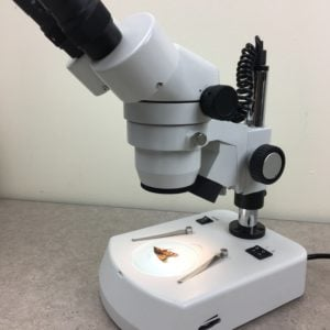 National Stereo Microscope